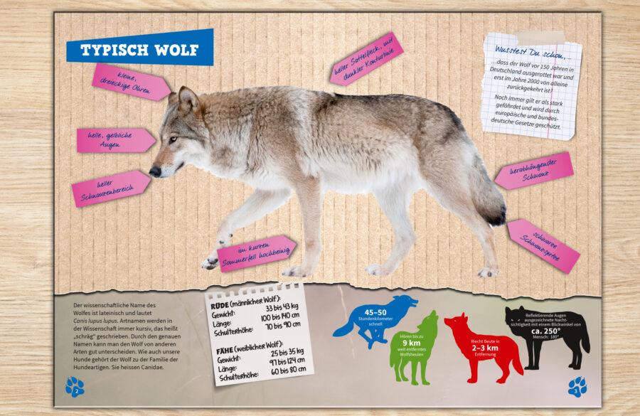 Merkmale Wolf